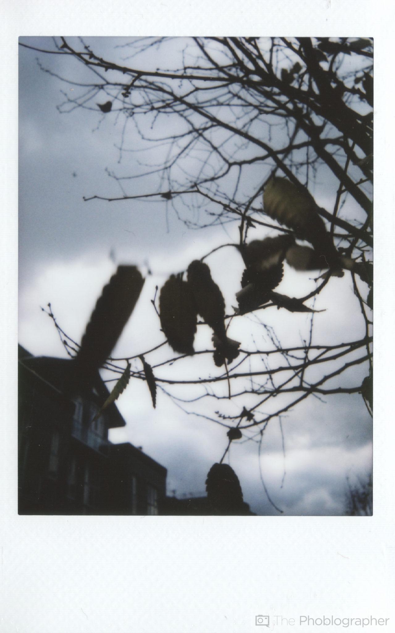 Chris Gampat The Phoblographer Fujifilm Instax Mini 70 scan macro leaves (1 of 1)