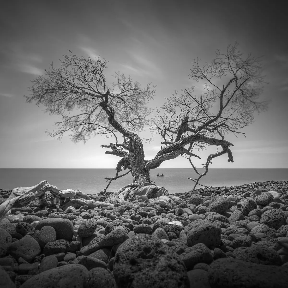 Daniel Tjongaris Black and White Photos of Lone Mangroves