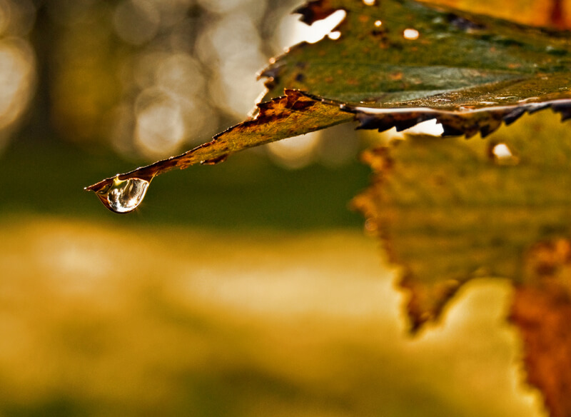 bokeh leaf and water drop