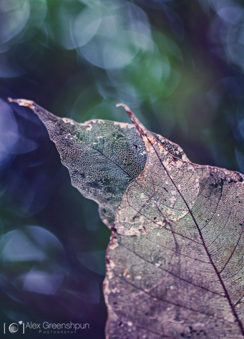 Memory-leaf-song-of-past-900
