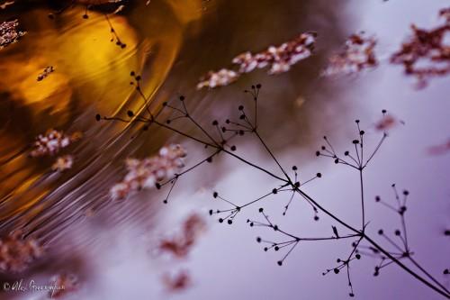 autumn-reflections-3-1-900