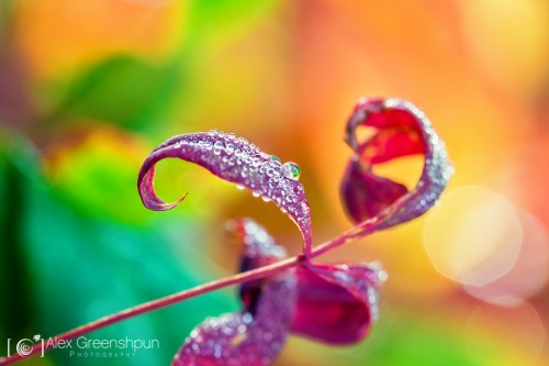 colorful-morning-dew-1-900