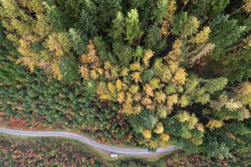 Topdown herfst bomen