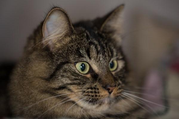 Portrait, photography, macro lens, cat