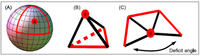 Reggi Calculus in Causal Dynamical Triangulations