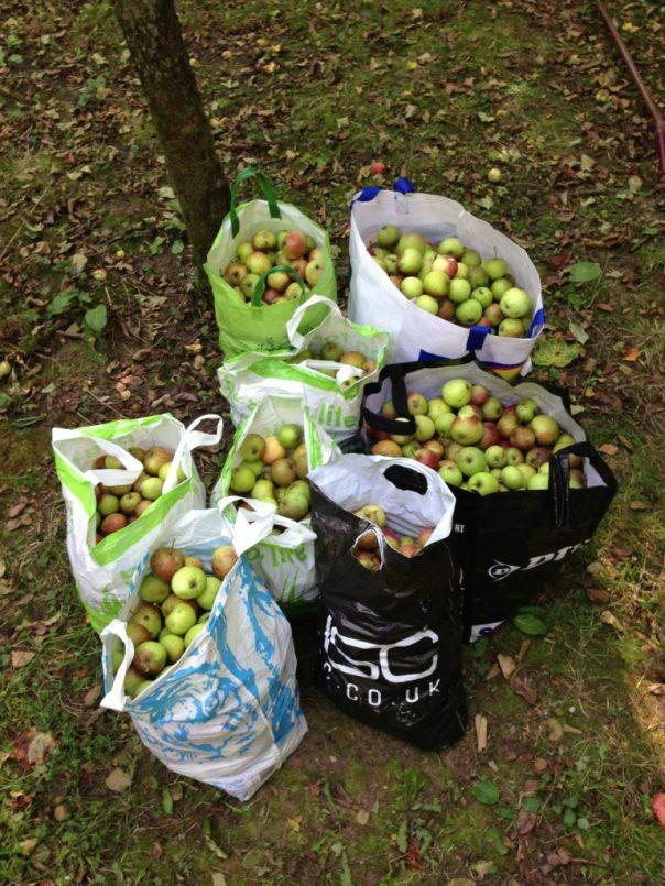 7 big bags of apples