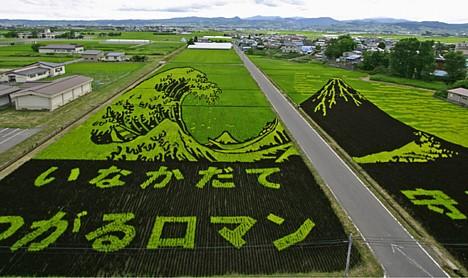 rice_art11.jpg