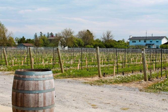 wineries 2