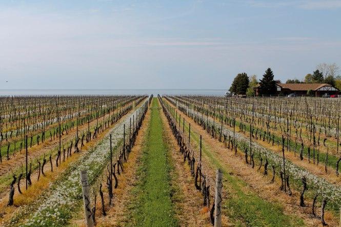 wineries 5