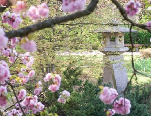 Setagaya Park Bridge Cherry Blossoms Sculpture View
