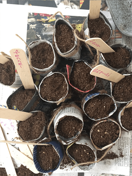 Seed starter pots with soil.