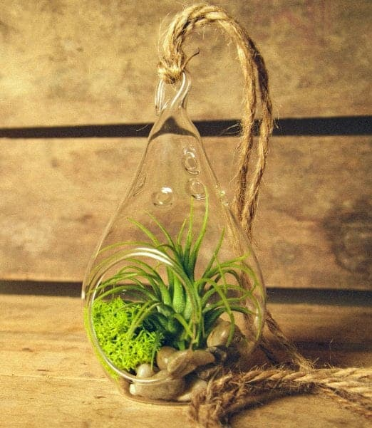 10+ Smarter Gift Ideas Teachers will Love: Air Plant | www.thepinningmama.com