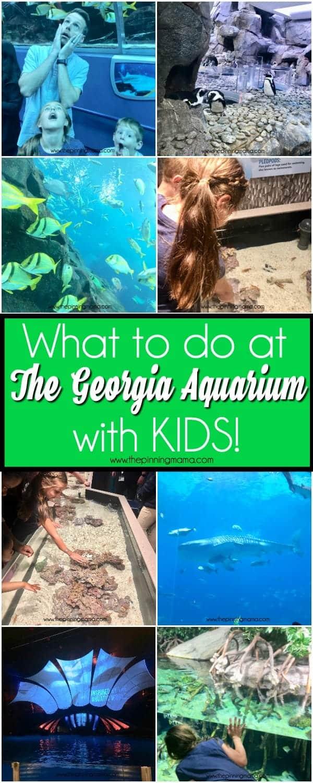 A list of what to do at the Georgia Aquarium in Atlanta
