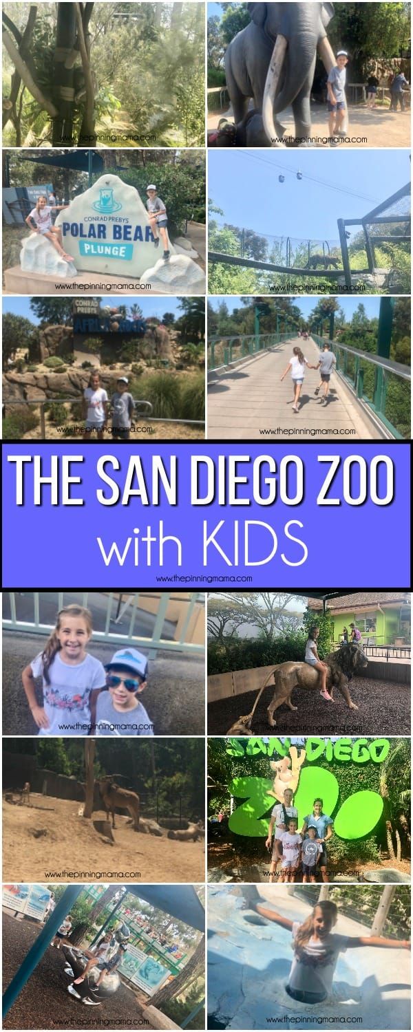 What to do at the San Diego Zoo with kids.