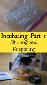 Incubating Part 1- Storing and Preparing: Learn how to properly store fertile chicken eggs and also learn the basics of setting up an incubator.