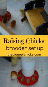 Brooder Set Up- leanr how to set up your brooder to raise baby chicks successfully!