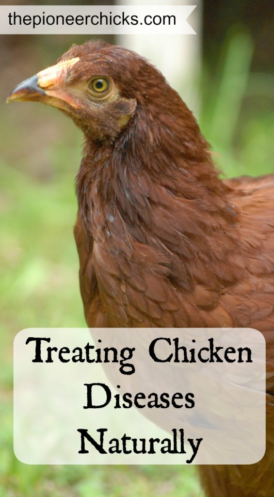 Treating Chicken Diseases Naturally- Part of being a chicken keeper is knowing how treat your chicken's illnesses. Learning how to treat them naturally is a great way to help them stay healthier in the long run!