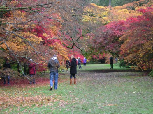Visitors walking through the trees.