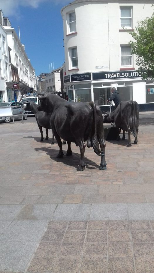 Bronze cows wandering through St. Helier