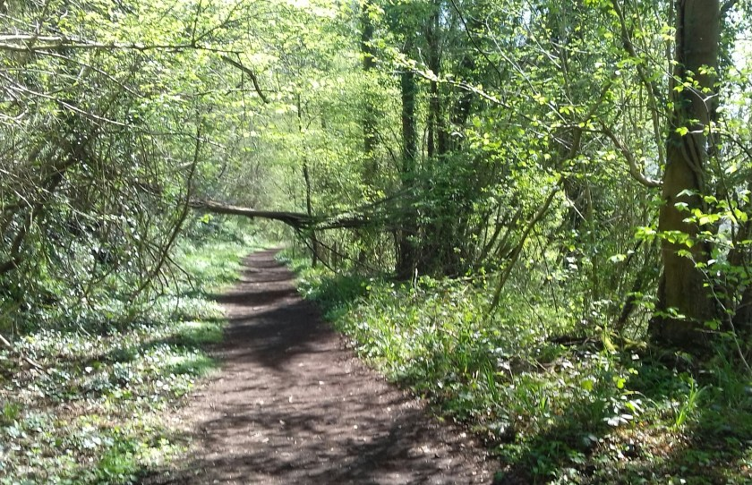 The footpath through the woods