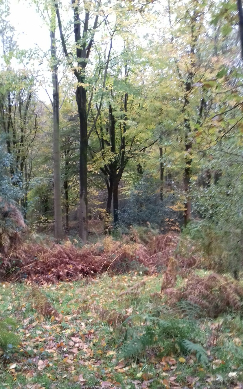The forest in November with brown bracken #Savernake forest