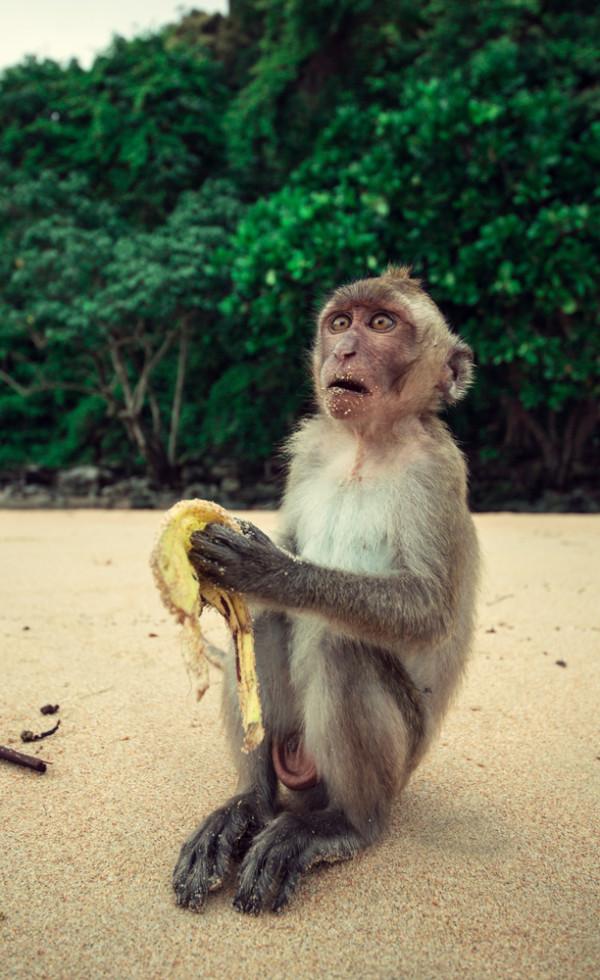 amuzanta poza imagine maimuta