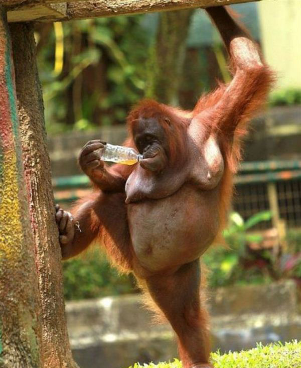 imagine maimuta