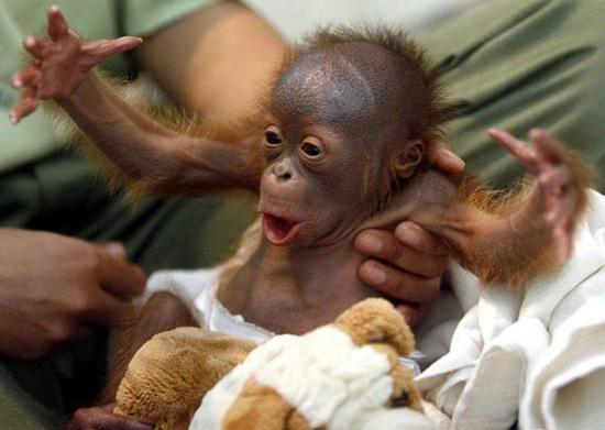 maimuta amuzant