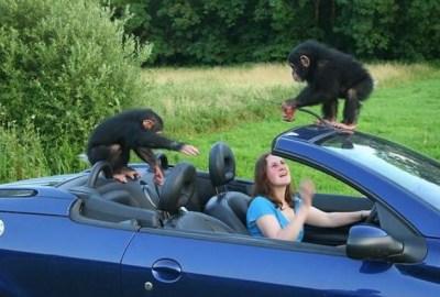 20 cele mai haioase poze cu maimuțe