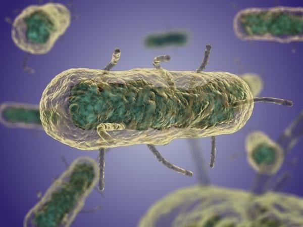 bacterii stomac