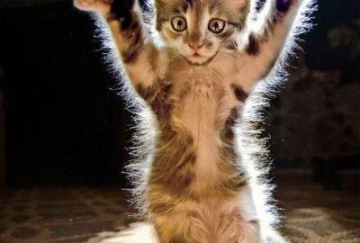 100 cele mai frumoase imagini cu pisici din lume