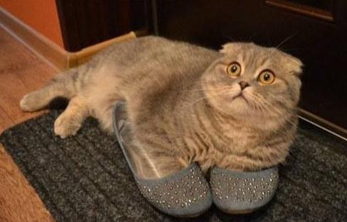 fotofrafie-cu-pisica