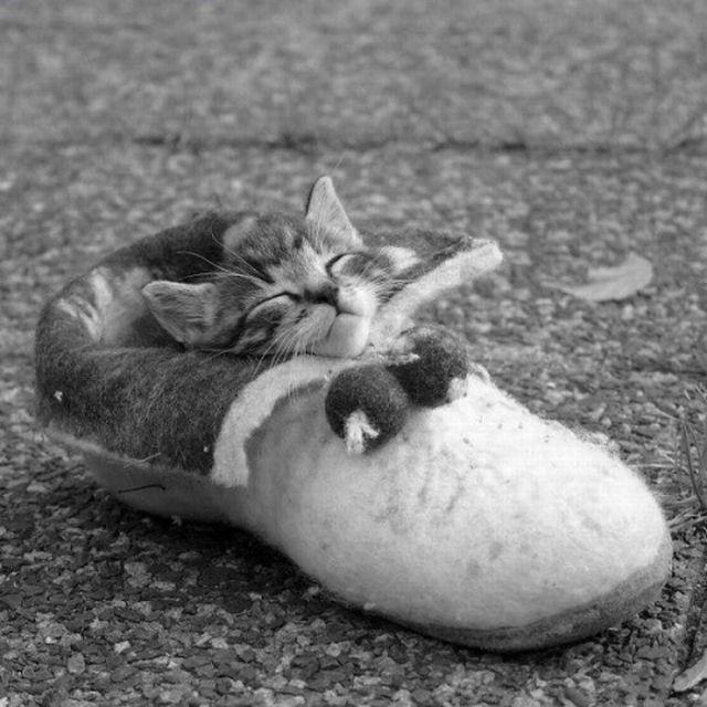 pisic-doarme-frumos