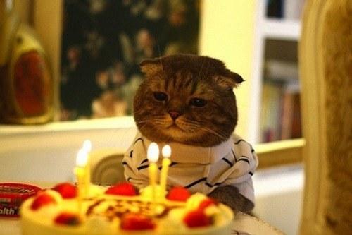 pisic-onomastica