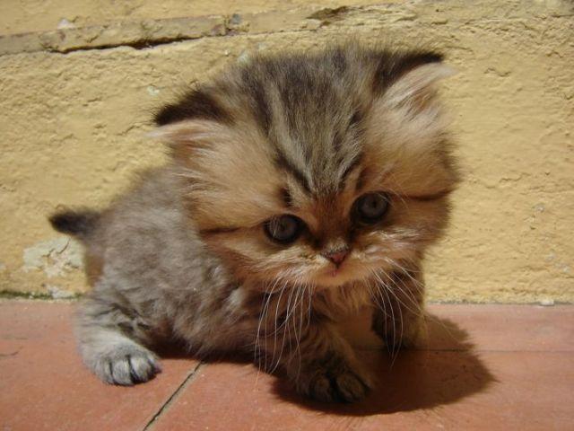 pisica-draguta