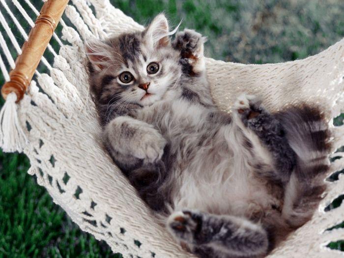 pisica-frumoasa-imagine