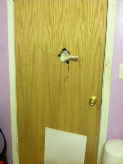 pisica-in-usa