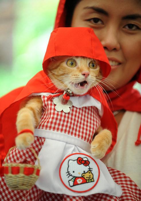 pisica-tare