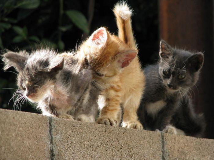 pisici-gingasi