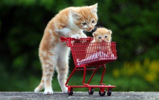 pisici-haioase