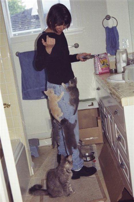 pisici-se-catara