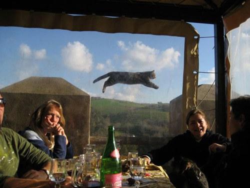 poza-tare-cu-pisica