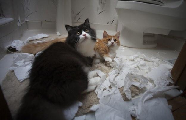 poze-cu-pisici-in-baie