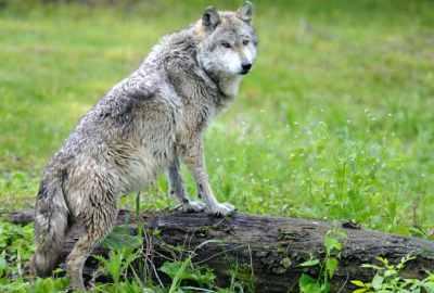 Top 15 animale pe cale de dispariție