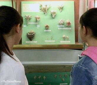 visita al museo delle conchiglie