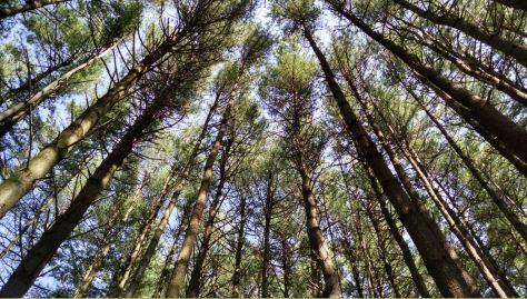 Pines, K. McCaffrey