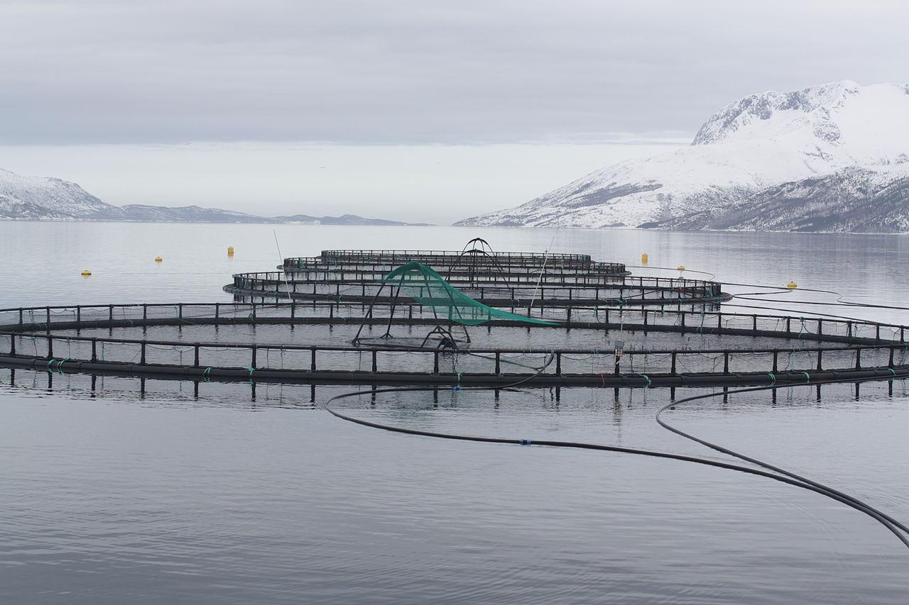 Caged fish farm