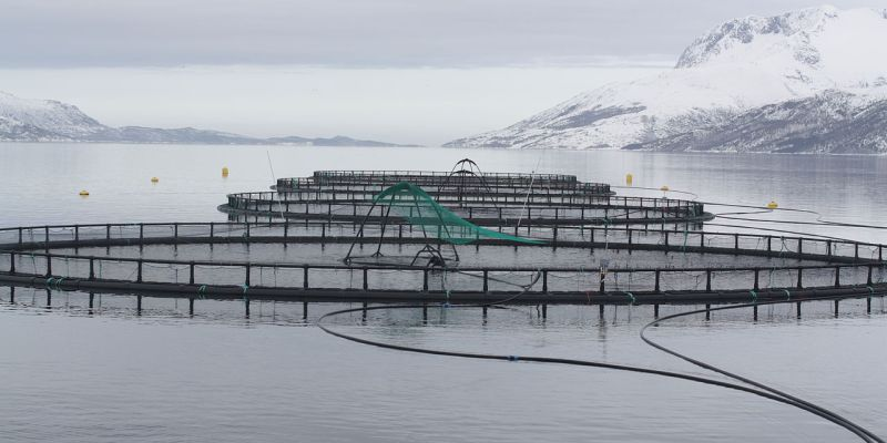 Caged fish farm