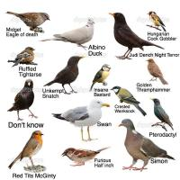 A guide to some birds you might see in your garden The Poke