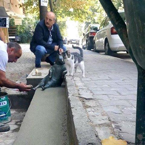Tombili Istanbuls internetfamous reclining cat now has